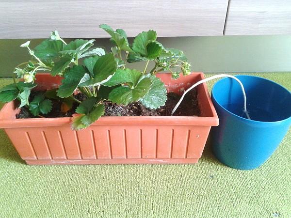 Innaffiare le piante in vacanza un impianto di for Irrigazione piante
