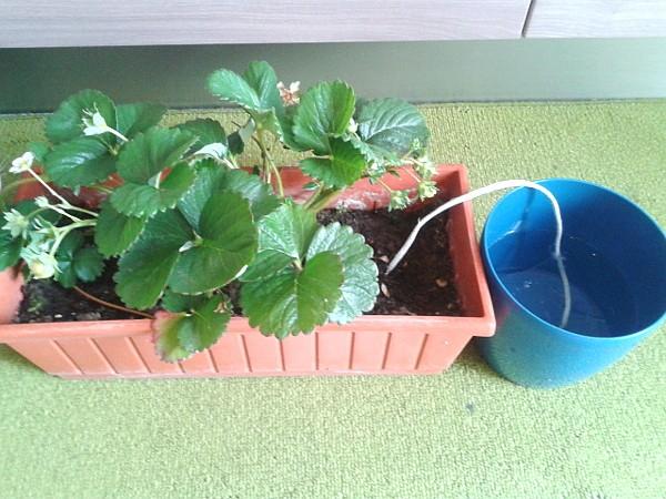 innaffiare le piante in vacanza un impianto di
