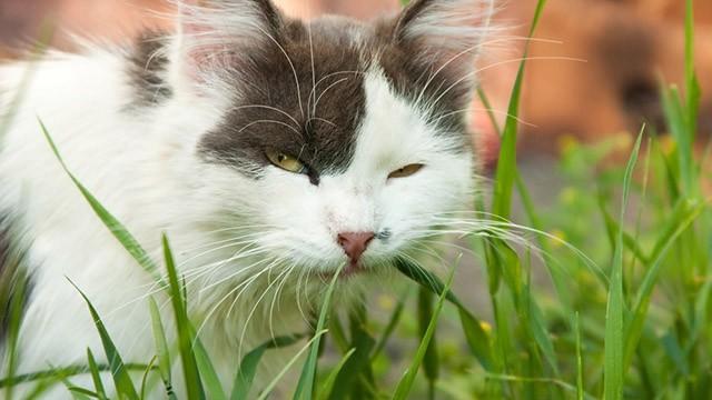 Perch il gatto mangia l erba for Cosa mangia il gatto
