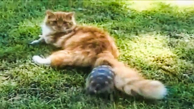 Tartaruga da terra come allevarla greenstyle for Contenitore tartarughe