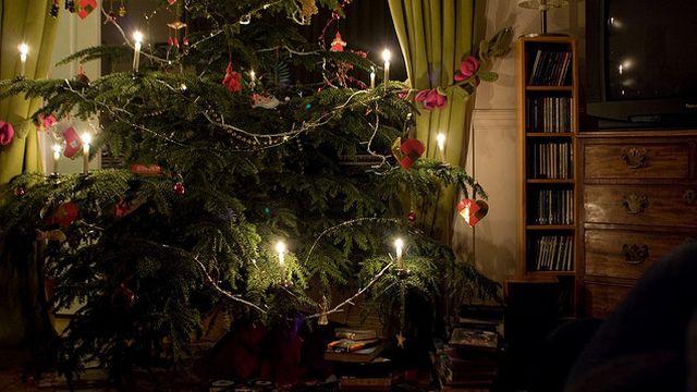 Come curare un albero di natale vero greenstyle for Albero di natale vero
