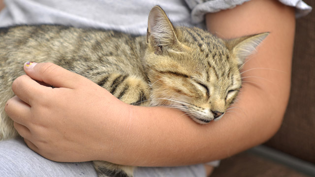 Le 5 migliori razze di gatti per bambini greenstyle for Piccoli piani colonica con foto