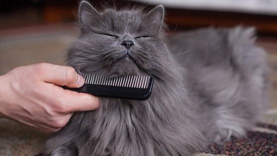 Pettinare il gatto