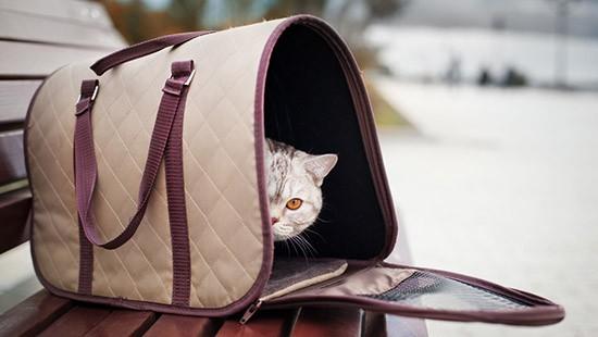 Trasportino morbido per gatti
