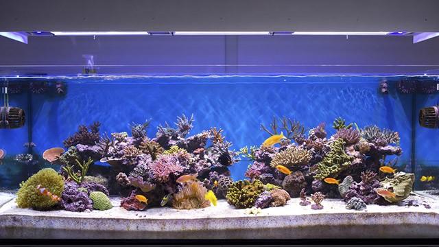 Pesci rossi come pulire l 39 acquario greenstyle for Lago per tartarughe