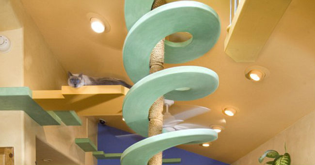 Una casa trasformata in parco giochi per gatti greenstyle for Quanto per costruire una casa in california
