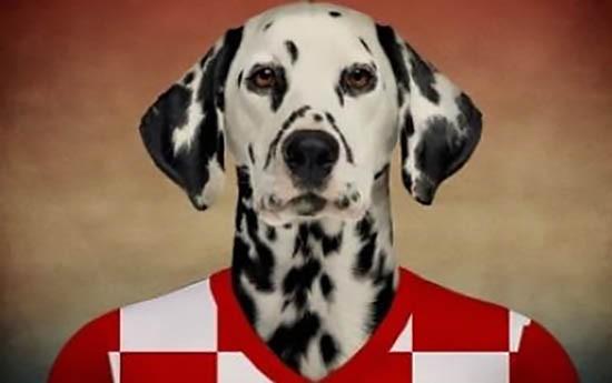 Cane dei mondiali
