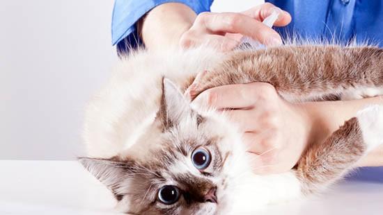 Gatto e iniezione