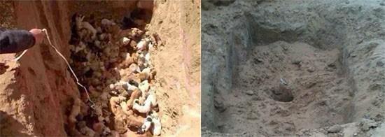 Cani sotterrati in Cina