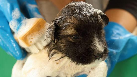 Bagno cucciolo cane