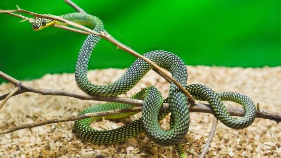 Serpente in terrario