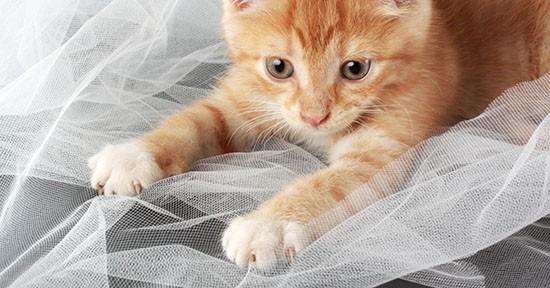 Gatto e unghie