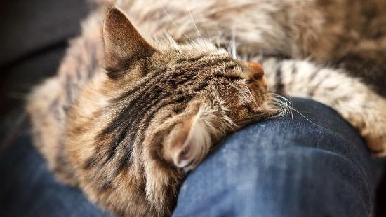 gatto ictus