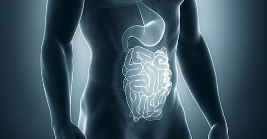 Stomaco e intestino