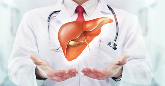 Fegato e medico