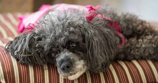 Princess il cane che ipnotizza gli uomini greenstyle for Princess cane