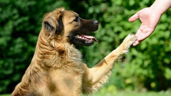 Cani e comportamento