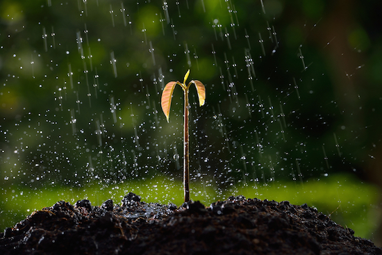Acqua, pioggia su pianta