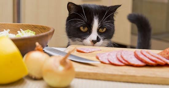 Gatto ruba il cibo