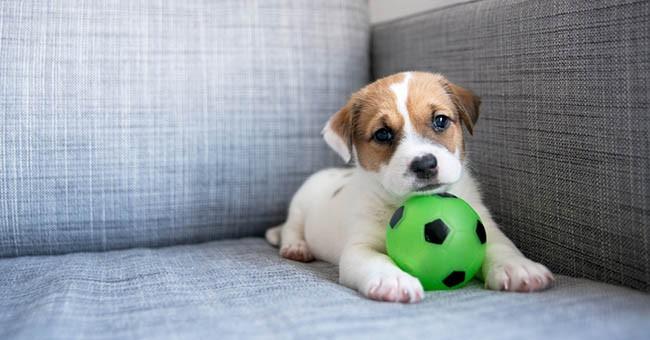 Cani: esercizi da fare in casa durante l'inverno - GreenStyle