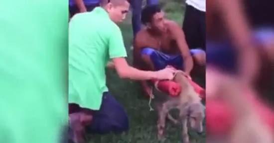 Cane legato ai petardi