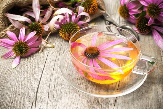 Echinacea, infuso