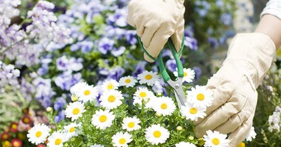 Margherite in giardino