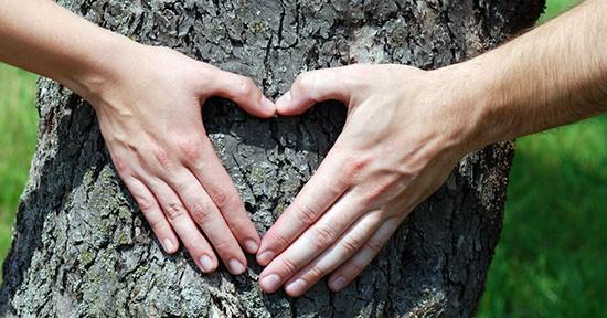 San Valentino, albero