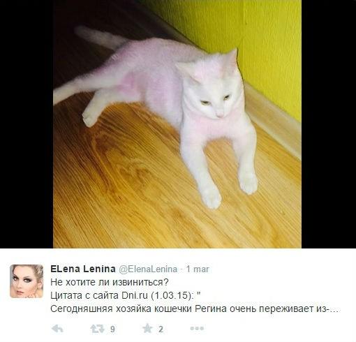 Gatto di Lena Lenina