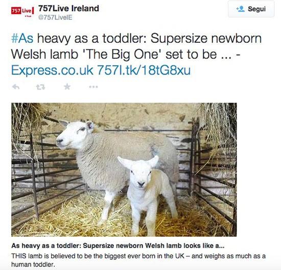 The Big One, agnello da record