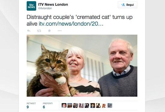 Amigo, gatto cremato