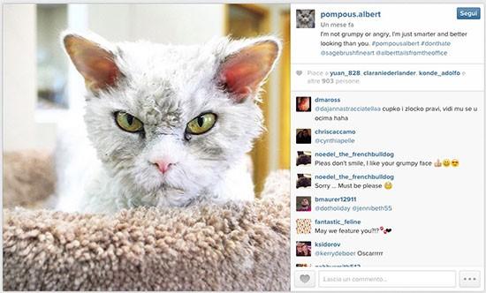 Pompous Albert via Instagram