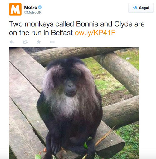 Scimmie in fuga