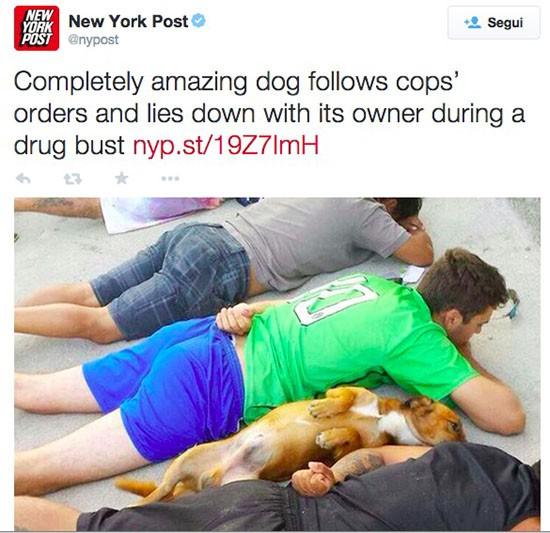 Cane e perquisizione