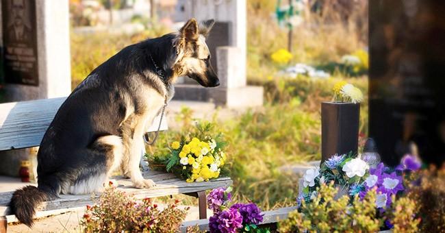 Ceneri degli animali domestici nei cimiteri di milano for Nei progetti domestici di terra