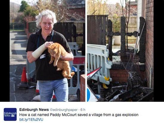 Gatto ed esplosione in Scozia