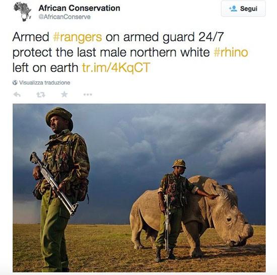 Rinoceronte e guardie