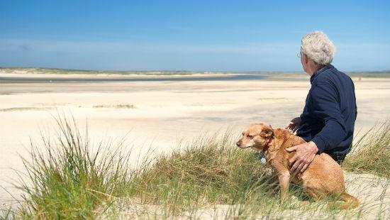Socializzare cane anziano
