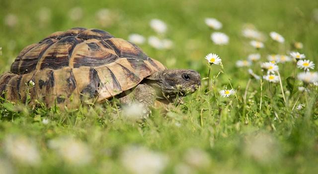 tartaruga di 109 anni torna a casa greenstyle