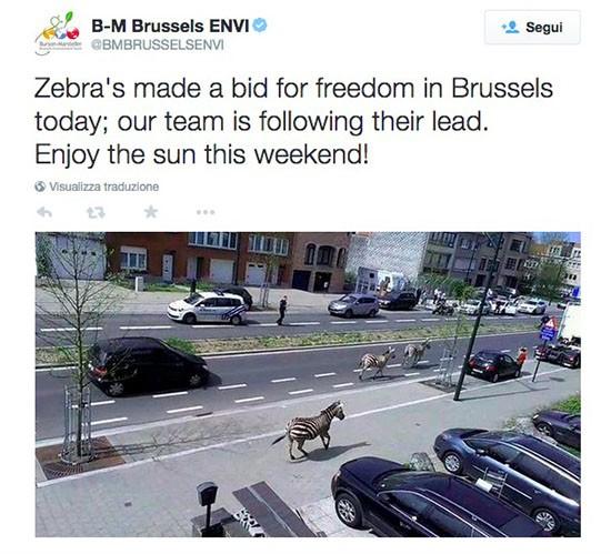 Zebre a Bruxelles