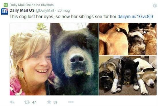 Kiaya Blind Dog