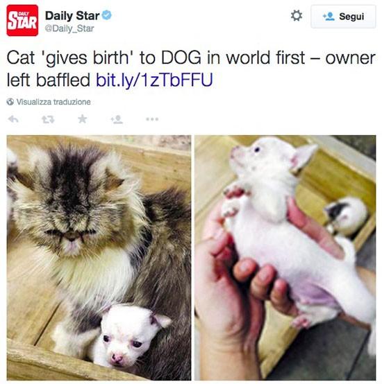 Cane e gatto in Cina