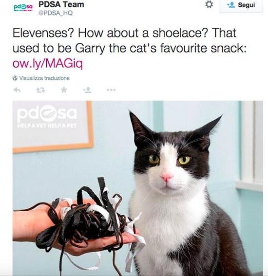 Gatto e lacci