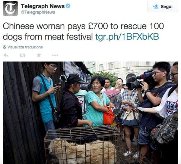 Donna salva cani in Cina