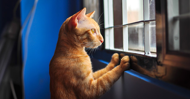 Incidenti Domestici Attenzione Ai Gatti E Alle Finestre