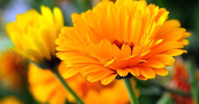Piante e fiori da esterno fioreria centrofiore trento