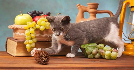 Gatto e pigna