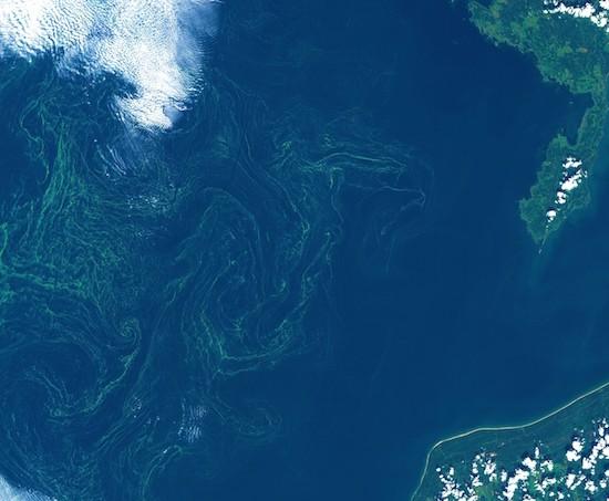 Baltico, tempesta di alghe