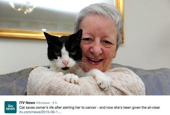 Gatto e tumore