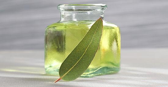 Olio eucalipto